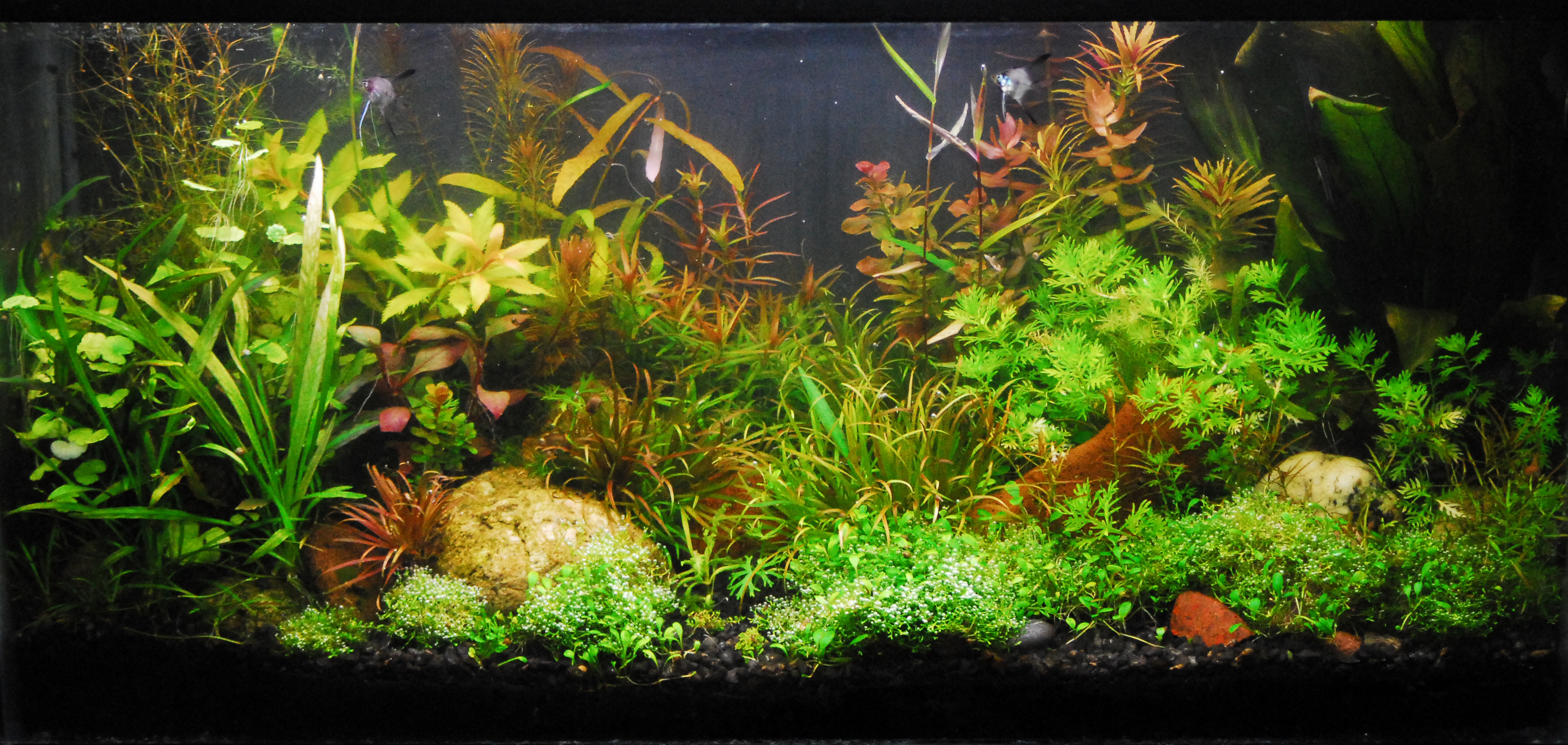 Natural aquariums guide to planted aquariums aquatic for Natural fish tank